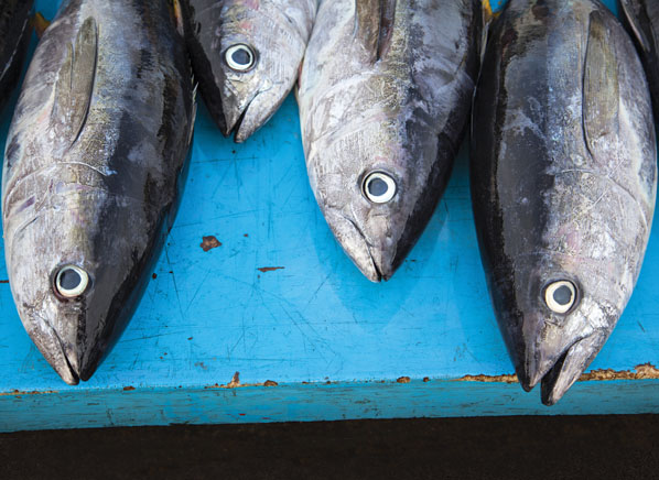 Consumer reports advises pregnant women to avoid tuna by for How much mercury is in fish