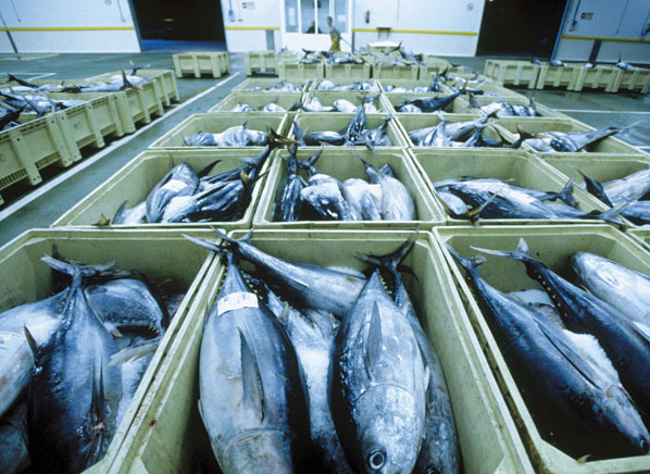 Low mercury and high mercury fishes consumer reports for Can you eat too much fish