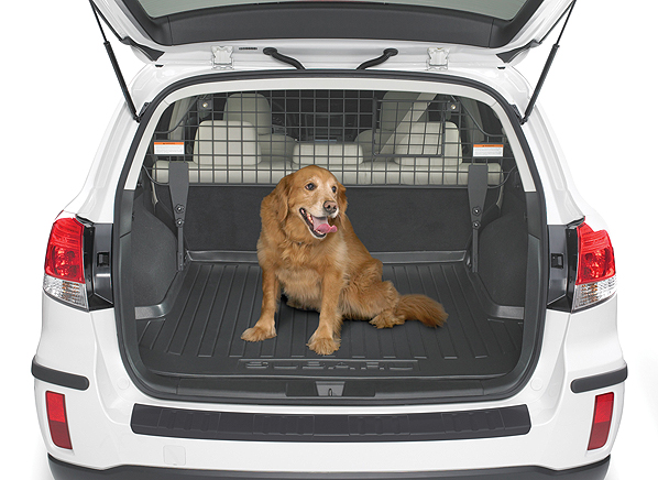 How To Make Boot Safe For Dogs