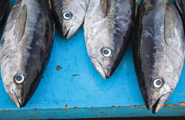 Low mercury and high mercury fishes consumer reports for Fish without mercury