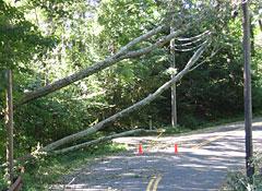 Hurricane-Irene-tree-across-road-2.jpg