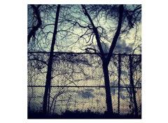 electronics_Instagram_Van_Cortland_trees.jpg