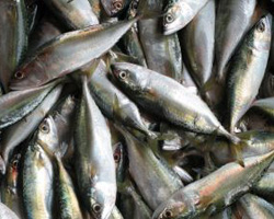 Q A Are Freshwater Fish As Healthy To Eat As Ocean Fish