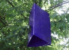 Purple_box.jpg